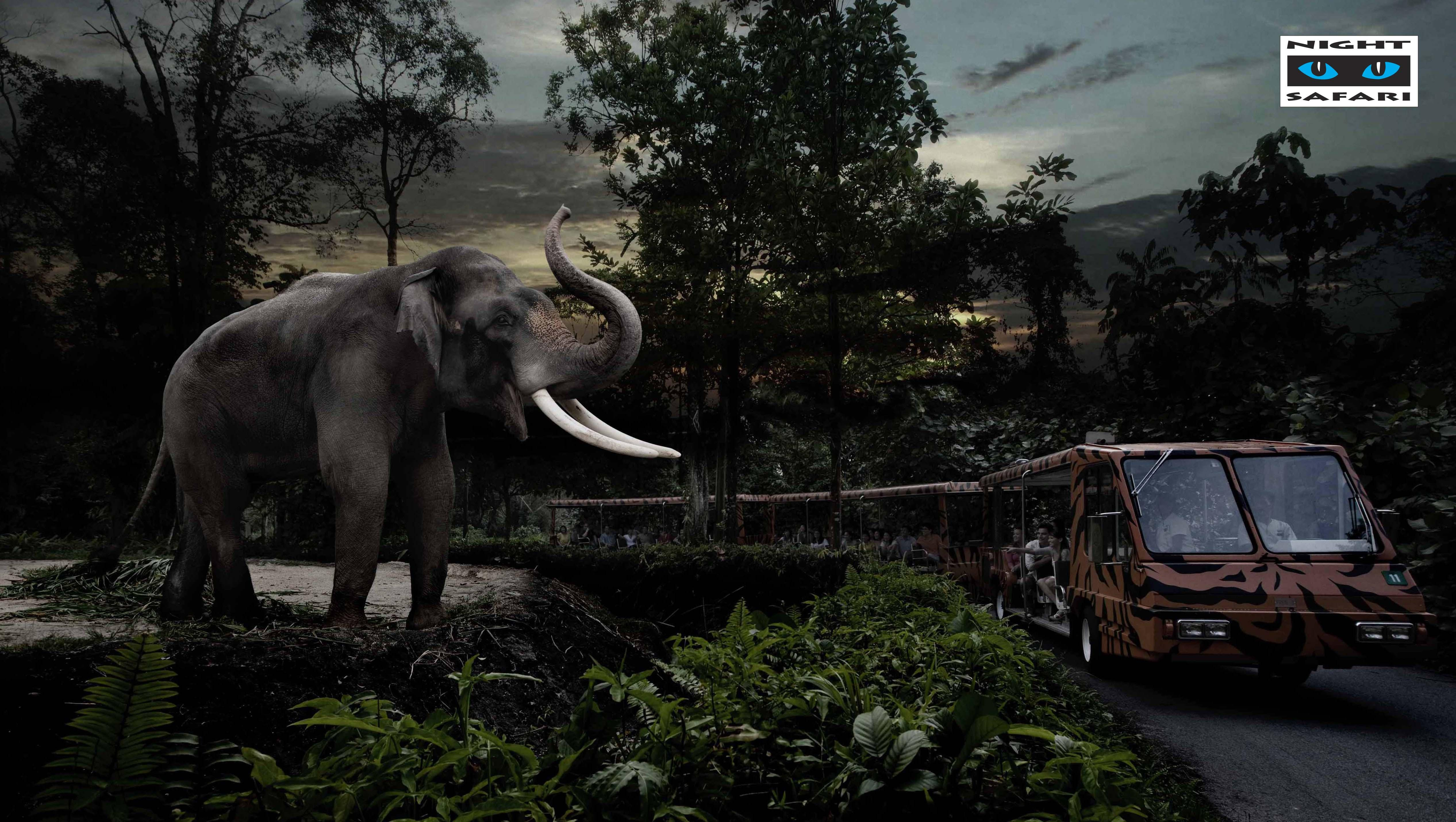 Magnificent bull elephant, Chawang, salutes visitors as they enjoy a tram ride in Singapore's Night Safari. Chawang, the park's largest resident, is one of five Asian elephants that calls this attraction home.