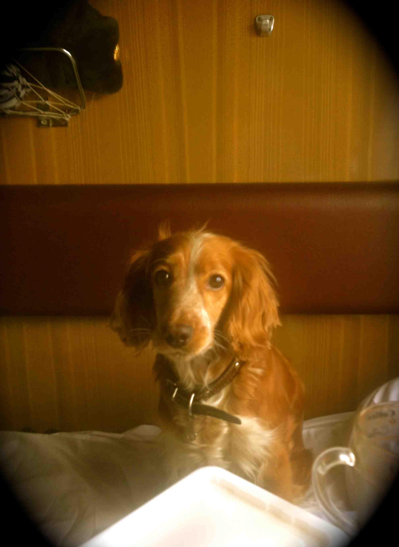 2014-07-04_53b6916ef1253_Dog.jpg
