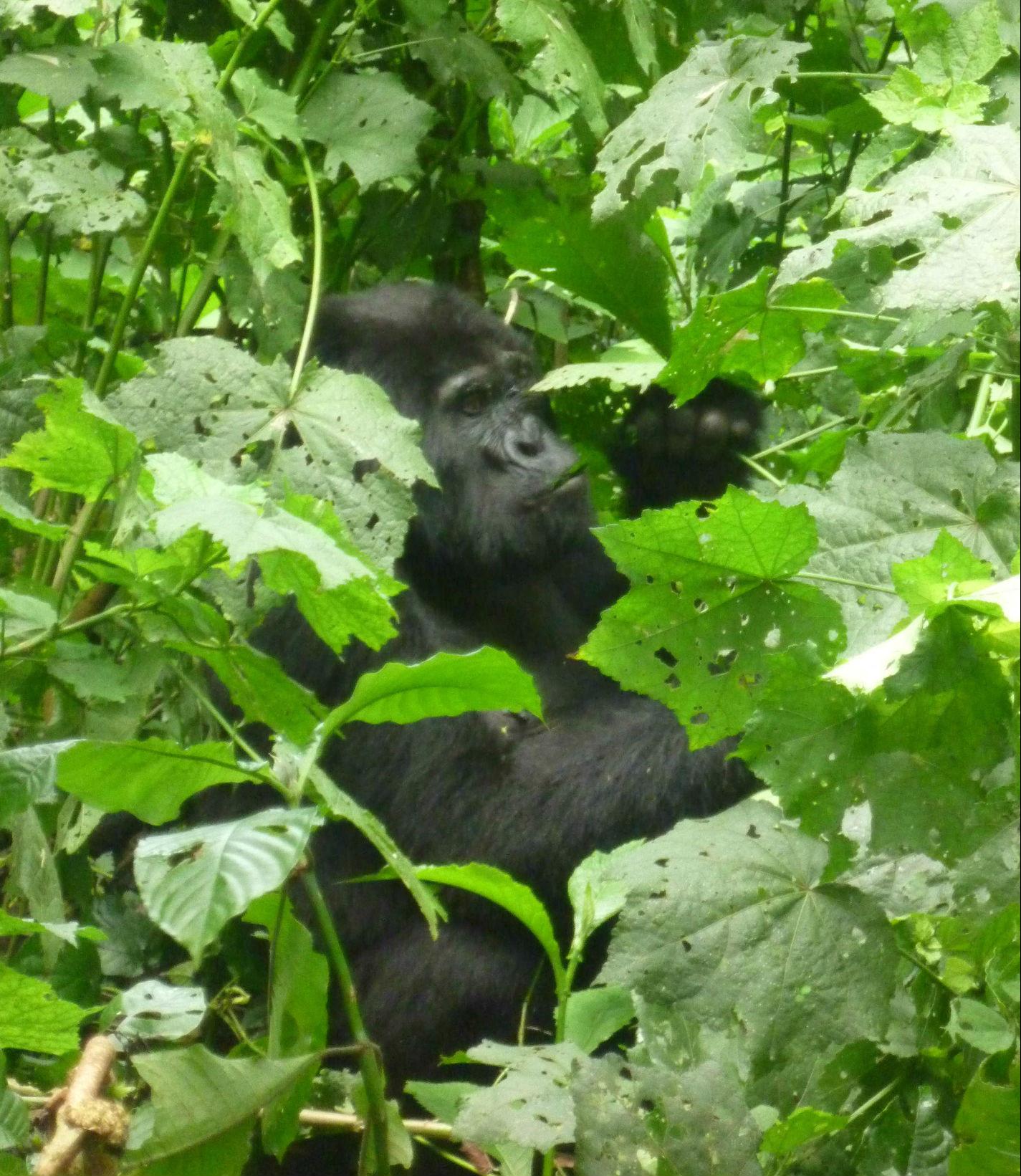 2014-07-04_53b7028104eff_uganda2.jpg